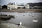 Seagulls gather nearby a destroyed port and fish processing factories in Ishinomaki city.