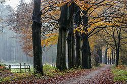 De Hoge Vuursche, Baarn, Utrecht, Netherlands