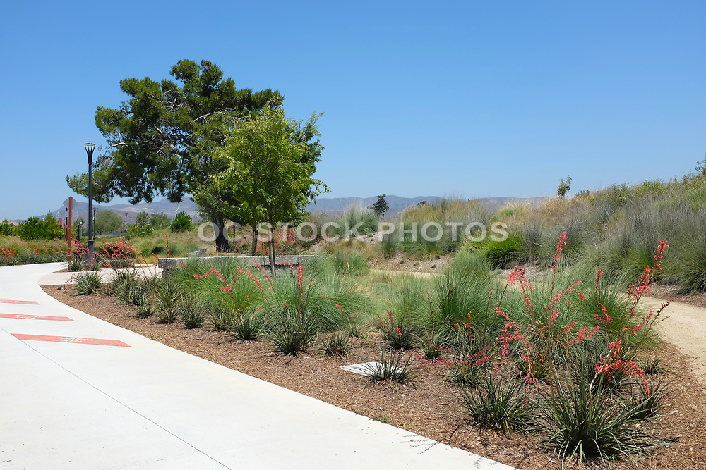 Pedestrian and Bike Trail at Irvine Great Park