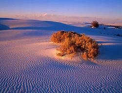 220 White Sands Burning Bush ©1999 JD Marston