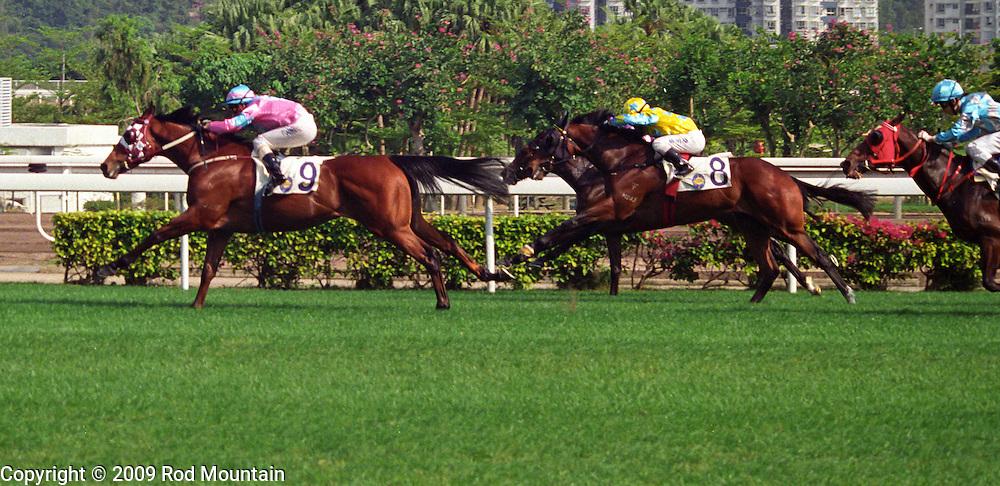 A profile of the horses racing at the Sha Tin Racecourse in Hong Kong.