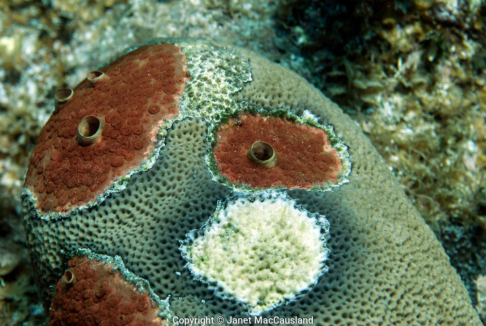 Coral bleaching and disease are symptoms of global warming and stress on our reefs. This should be of grave concern for everybody because much of our oxygen is produced in our reefs.