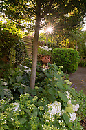 Sunrise in a small private garden in West London.