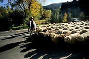 Redyk jesienny (osod, łosod, łossod) ma odprowadzić owce do poszczególnych gospodarstw. Jesienny spęd owiec ma ulicach Zakopanego charakter widowiska folklorystycznego.
