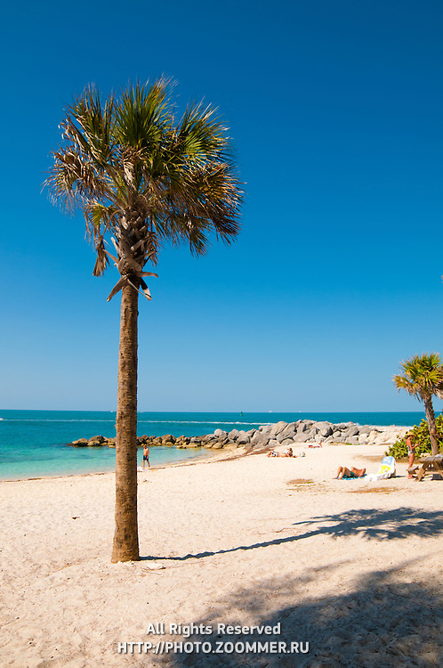 Palm tree and beach of the Fort Zachary Taylor State Park