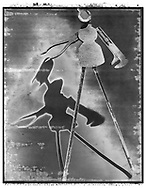 Solaroid - At The Circus - The Stiltman - This series was inspired by Circus Archaos in 1989 to create a circus made up of characters constructed from rusty objects and depicted by shadows. The print surface is overlaid aith a crystal patina that developed as the polaroid negative dried.  This is a solarised polaroid photo art print by Paul Williams who invented the technique and is the only photographer to have used it. The process is no longer possible.