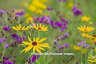 63899-05410 Sweet Black-eyed Susan (Rudbeckia subtomentosa) and Missouri Ironweed (Vernonia missurica) Marion Co., IL