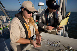 Texas Parks & Wildlife Coastal Fisheries Field Technician, Claire Iseton, and Texas A & M University intern, Katie Westmoreland, analyzing a Bay whiff founder (Citharichthys spilopterus) for marine resource monitoring.