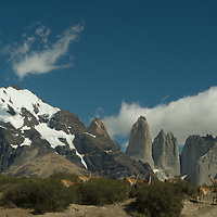 Guanacos graze below the Mount Almirante Nieto and the Towers of Paine in Torres del Paine National Park, Chile.