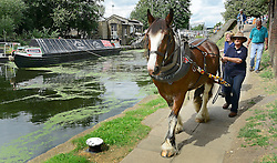 © Licensed to London News Pictures. 23/08/2012. London, UK Ilkeston, a restored narrowboat, is towed by a horse, Buddy, a 13-year-old Clydesdale, across London's canal network, on its way to the London Canal Museum. It has journeyed from Ellesmere Port in Cheshire, through more than 100 locks, to London to celebrate its 100th birthday. Photo credit : Stephen Simpson/LNP