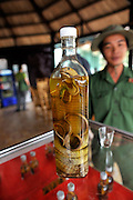 A bottle of Snake Wine (steeped). Venomous snakes are placed in a bottle of rice wine and left to steep for many months. The wine is drunk as a restorative in small doses. Large scorpions are often added also. Cu Chi, Vietnam