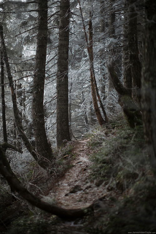 Wholly in the the clouds the exposed section of forest is encased in a white coating of hoar frost.