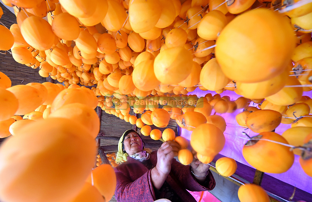 Nov. 1, 2018 - Zibo, China -  A villager dries persimmons in Yuezhuang Town of Yiyuan County, Zibo City, east China's Shandong Province. Autumn is the harvest season of persimmons in Yiyuan. The persimmon business has become a source to increase income for local farmers.   (Credit Image: © Zhao Dongshan/Xinhua via ZUMA Wire)