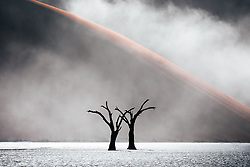 Even in the deadliest, driest corner of our planet, a fortunate stroke of serendipity can cause life to emerge. Shot on a quiet morning in Deadvlei, Namibia, when the entire scene instantly came to life by the sudden occurrence of sea mist, creating constantly changing compositions and patterns. A wonderful display of the power of nature. <br /> <br /> BIO: Pie Aerts is a Dutch documentary and wildlife photographer with a sincere interest in human/wildlife conflict stories. Through his lens, he examines the intricate relationship between animals, humans and nature. And, as we become increasingly distant from each other and ourselves, he uses photography to explore the cause of this disconnect. In March 2020, when the world came to a halt and all of his projects were cancelled or put on hold, he initiated Prints for Wildlife, a month-long fundraiser for conservation. In just under a month he raised $ 660,000 for conservation. Pie is an official Canon Europe Ambassador. <br /> <br /> Website: www.pieaerts.com<br /> Instagram: @pie_aerts