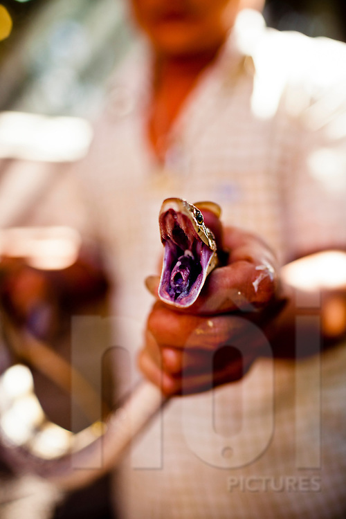 A restaurant owner shows a lively snake at Le Mat snake village in Hanoi, Vietnam, Asia