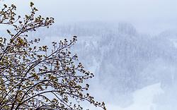 28.04.2017, Kaprun, AUT, Wintereinbruch in Salzburg, im Bild grüne Blätter auf einem Baum und angeschneite Nadelbäume // green Leaves on a tree and snow covered Needle trees in Kaprun, Austria on 2017/04/28. EXPA Pictures © 2017, PhotoCredit: EXPA/ JFK
