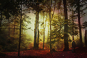 Person walking in a misty forest in morning light - photograph edited with texture overlays