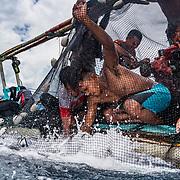 Fisherman off North Sulawesi, Indonesia work to bring in their catch of skipjack tuna (Katsuwonus pelamis).