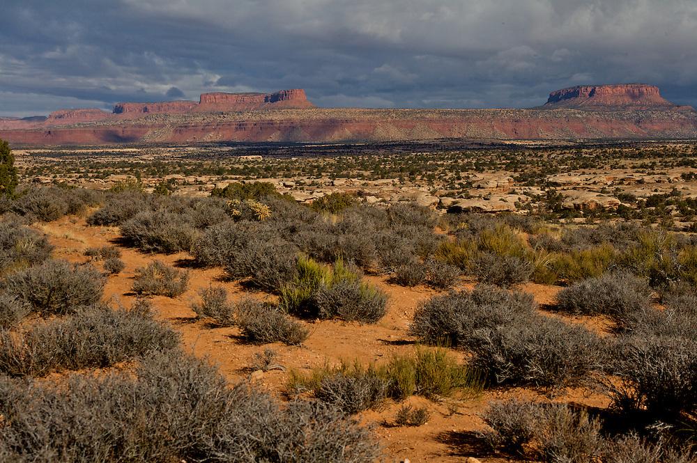 Trail across Cedar Mesa.