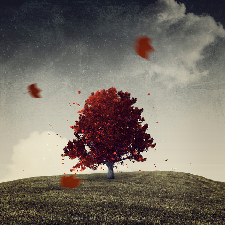 Maple tree with red foliage shaking in the wind - photomanipulation
