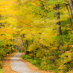 Wind blurs the fall colors along Kelly Stand Road in southern Vermont. Green Mountain National Forest.