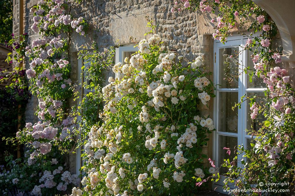 Roses on the house walls. Left to right: Rosa 'Narrow Water', 'Blush Noisette', 'Ghislaine de Féligonde' AGM and 'Debutante'