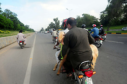 August 29, 2017 - Islamabad, Federal Capital, Pakistan - People carry their animal in a motor bike they bought from a cattle market ahead of Muslim Eid al-Adha holiday in Islamabad. Eid al-Adha, or Feast of Sacrifice, most important Islamic holiday marks the willingness of the Prophet Ibrahim (Abraham to Christians and Jews) to sacrifice his son (Credit Image: © Zubair Abbasi/Pacific Press via ZUMA Wire)