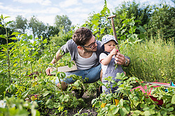 Mid adult man showing radish to his baby in community garden, Bavaria, Germany