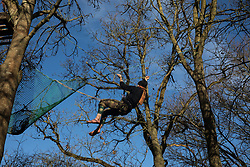 Harefield, UK. 19 January, 2020. A tree-climbing activist uses a line and safety loop to transfer from one tree to another in the Colne Valley wildlife protection camp. Activists from Extinction Rebellion, Stop HS2 and Save the Colne Valley attending a 'Stand for the Trees' event timed to coincide with tree felling work for HS2 have retaken the camp from which a small group of Save the Colne Valley activists had been evicted by bailiffs acting on behalf of HS2 over the previous week and a half. 108 ancient woodlands are set to be destroyed by the high-speed rail link.
