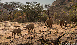 Orphaned baby elephants of the Reteti Elephant Sanctuary (@r.e.s.c.u.e) spent most of their day in the wild, learning to BE wild. They spend every day from 6am to 6pm in the wildness learning to graze, browse and be a part of the wild so that when it's time to re-introduce them, they will be prepared. <br /> <br /> Reteti Elephant Sanctuary, in northern Kenya is the first ever community-owned and run elephant sanctuary in Africa. The sanctuary provides a safe place for injured elephants to heal and later, be returned back to the wild.  You can support this incredible place and the people who protect wildlife. Make a $10 contribution in support of Reteti for a chance to win a trip to Kenya, see Dave Matthews in concert and take home Dave's guitar with @prizeo (Link in profile). Not only will you be helping care for orphaned baby elephants and strengthening community ties, you'll also have a chance to win a life-changing trip to see the sanctuary in person. The first $10,000 in funds raised will be generously matched by Elephant Gems (@elephantgems).<br /> <br /> Reteti operates in partnership with Conservation International (@conservationorg) who provide critical operational support and work to scale the Reteti community-centered model to create lasting impacts worldwide. <br /> <br /> Photo by @amivitale.