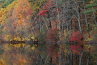 Shoreline trees and shrubs chaning color for the fall.