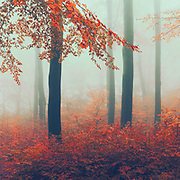 Deciduous forest on a misty November morning. View of the wet underwood.<br /> Redbubble prints & more--> https://www.redbubble.com/shop/ap/57087224?asc=u