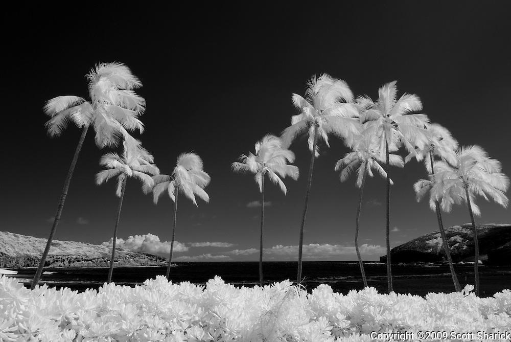 An infrared image of Hanauma Bay on Oahu, Hawaii.