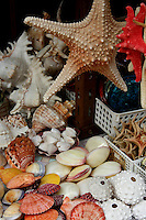 Starfish, Seashells - Starfish or sea stars are star-shaped echinoderms.  About 1500 species of starfish exist on the seabed in all the world's oceans, from tropics to polar waters.  The fossil record for starfish is ancient, dating back to around 450 million years ago.