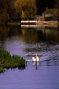 Image of homes along the Deschutes River in Bend, Oregon, Pacific Northwest by Randy Wells
