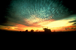 silhouette of a longhorn on a country sunset