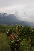 Italy, Sudtirolo. Cantina Colterenzio, Cornaiano, Wolfgang Raifer, direttore