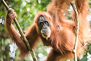 Indonesia - Sumatra - Bukit Lawang