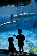 children observe captive bottlenose dolphins, Tursiops truncatus, at at Discovery Cove, Sea World, Orlando, Florida