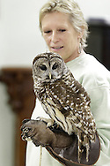 Wurtsboro, New York  - Ellen Kalish of the Ravensbeard Wildlife Rehabilitation Center holds a barred owl (Strix varia) during a live bird demonstration at the Wurtsboro Winterfest on Feb. 11, 2012. The program was presented by the Basha Kill Area Association. ©Tom Bushey / The Image Works
