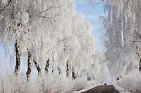 10.12.2014 gmina Krynki woj podlaskie N/z szadz na drzewach przy drodze nr 676 z Bialegostoku do Krynek fot Michal Kosc / AGENCJA WSCHOD
