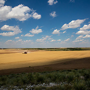 A combine harvests wheat in Kimball, NE, July 13, 2017.