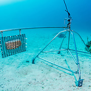 A baited remote underwater video (BRUV) setup by scientists to determine predator abudance in The Bahamas.