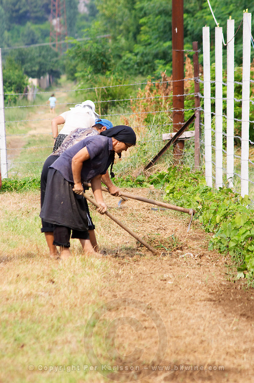Women workers in the vineyard with tools. Fidal vine nursery and winery, Zejmen, Lezhe. Albania, Balkan, Europe.