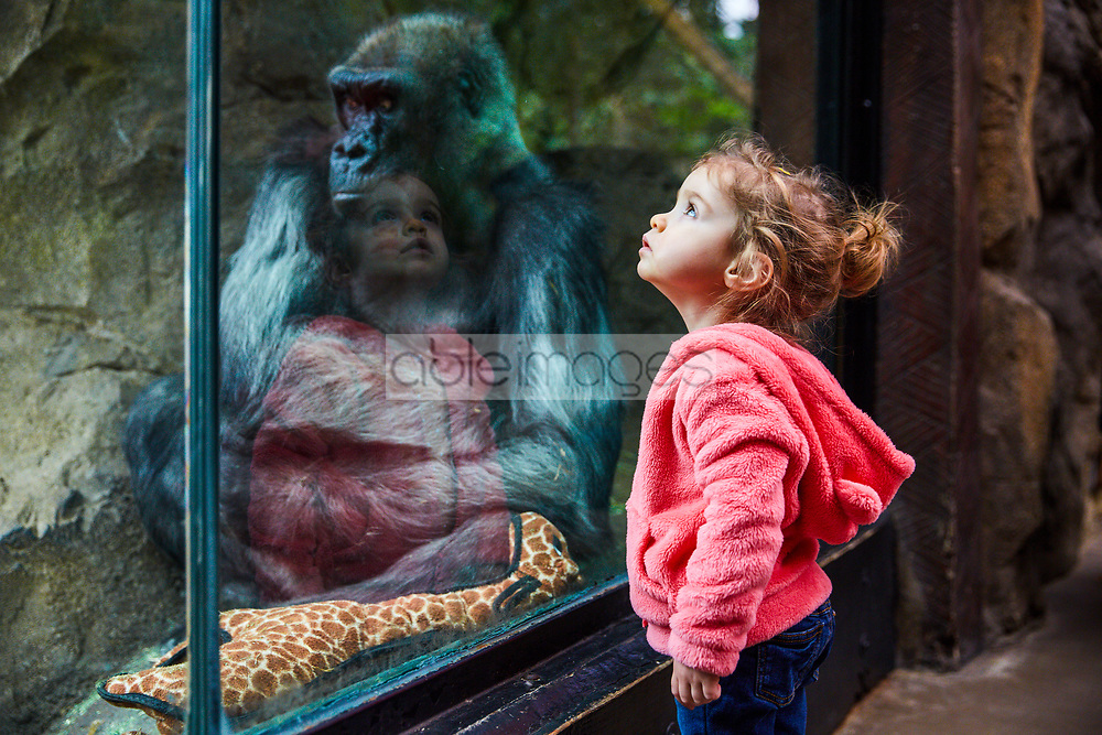 Young Girl at Zoo  Standing in front of the Gorillas Enclosure