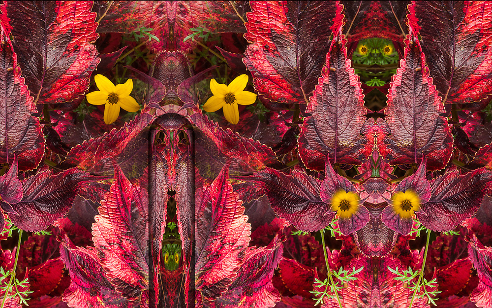 """""""Eyes of the Garden"""", derivative image from a photo of a landscaped garden, October, Skagit County, Newhalem, Washington, USA"""