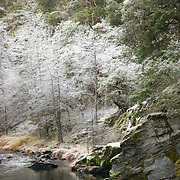 Calm mountain stream near the California Oregon border close to Applegate Lake.  Morning frost on the trees give the scene a surreal look