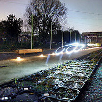 Nederland, Zaandam , 5 november 2014.<br /> Plant-e brengt wereldwijd het eerste product op de markt dat elektriciteit maakt uit de groei van planten. Het spin-off bedrijf van Wageningen Universiteit bestaat nu drie jaar en heeft de afgelopen drie jaar hard gewerkt aan het ontwikkelen van een product op basis van innovatieve technologie die het mogelijk maakt om elektriciteit te oogsten terwijl de plant doorgroeit. Recent heeft het Rijk als eerste een grote partij energie opwekkende planten besteld bij Plant-e.De planten worden geplaatst op het Hembrugterrein in Zaandam voor buitenverlichting en als oplaadpunt voor mobiele telefoons.<br /> Op de foto: Een bezoeker loopt met zaklantaarn over het Hambrugterrein om de planten beter te bekeijken tijdens de presentaite van het project.<br /> Foto:Jean-Pierre Jans