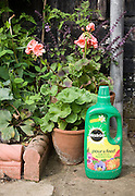 Miracle Gro plant fertiliser Pour and Feed container bottle in garden, UK