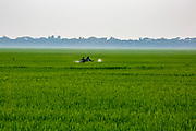 Two crop sprayers walk through a paddy field spraying pesticides on the 2nd of October 2018 in Satkhira District, Bangladesh. Recently salt resistant paddy has been developed offering hope to farmers who's crop is affected by climate change.  Satkhira is a district in southwestern Bangladesh and is part of Khulna Division. It lies along the border with West Bengal, India. It is on the bank of the Arpangachhia River. (photo by Andrew Aitchison / In pictures via Getty Images)